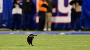 Black Cat Runs Onto Field At Metlife Stadium During Giants vs. Cowboys Game