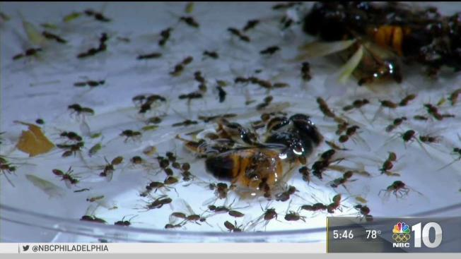 What Are Winged Ants And Why Do They Swarm