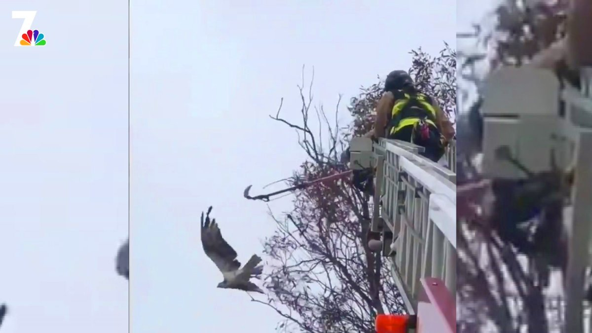 Firefighters Go up 80 Feet to Rescue Raptor