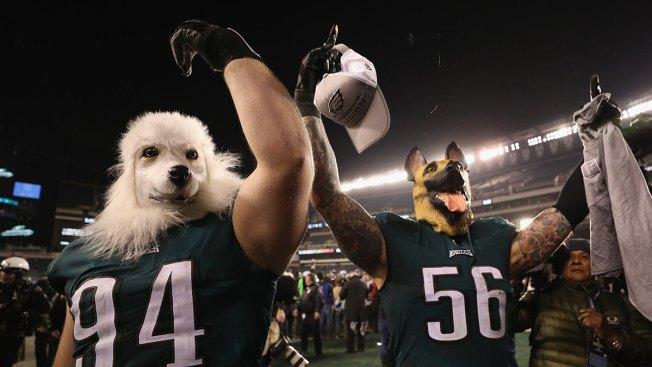 Image result for eagles underdog