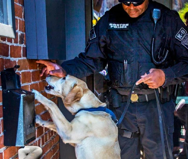 In The Wake Of The Boston Marathon Bombing Dogs Seemed To Pop Up Everywhere Not Just Any Canines Of Course Highly Trained Detection Dogs At The Side Of