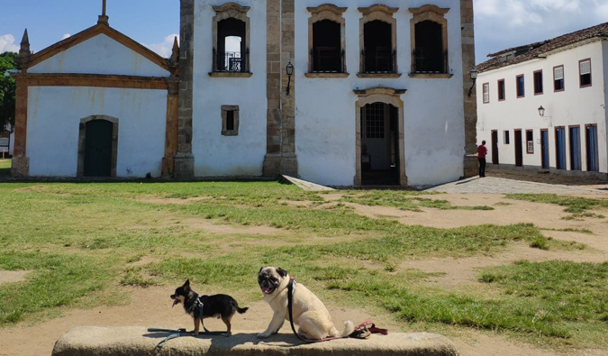 Boogie the pug and Marcelo the chi in Paraty, Brazil