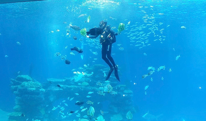 A scuba diver in the clear Mediterranean waters of Israel