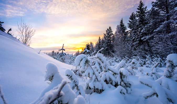 Snowcapped trees and a beautiful sky in Ylläs, Finland