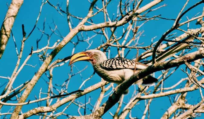 A rare bird in Kruger National Park.