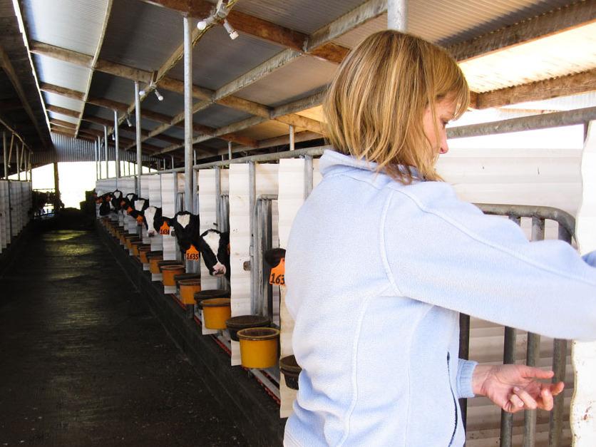 Jill Giacomini Basch visits some of her farm's Holstein calves.