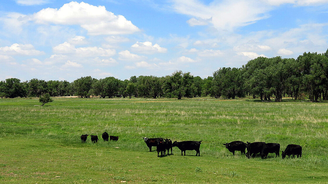 Fox Ranch, outside Yuma County, Colo., is a 14,000-acre nature preserve and working commercial cattle ranch. The ranch is used by the Nature Conservancy to put into practice its panned grazing technique.