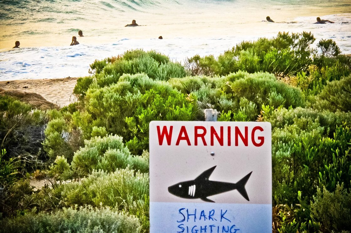 A shark warning is displayed near Gracetown, Western Australia, in November. An Australian man was killed by a shark near the area that month, sparking a catch-and-kill order.