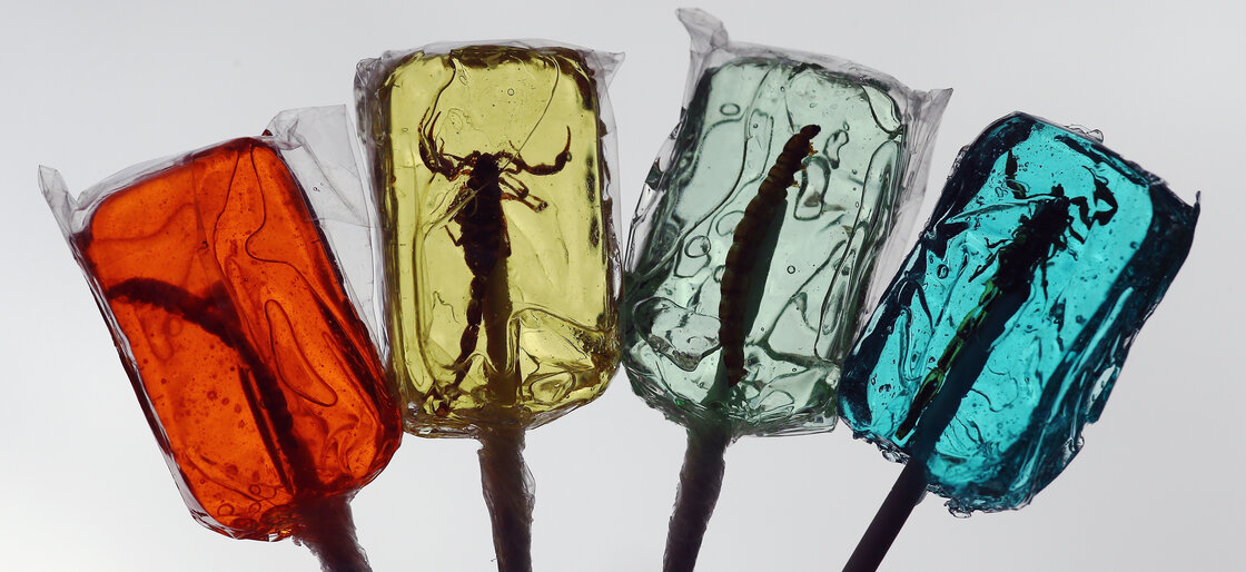 Insect candy given out as part of a promotion in London last year.