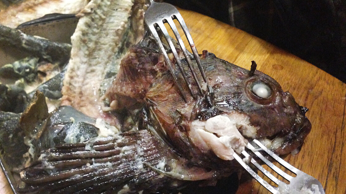 The head of a cabezon fish prepared by the author.