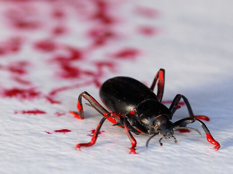 Kutcher also uses his insects, including this darkling beetle, to create bug art, coating their feet in paint and letting them walk across canvases.