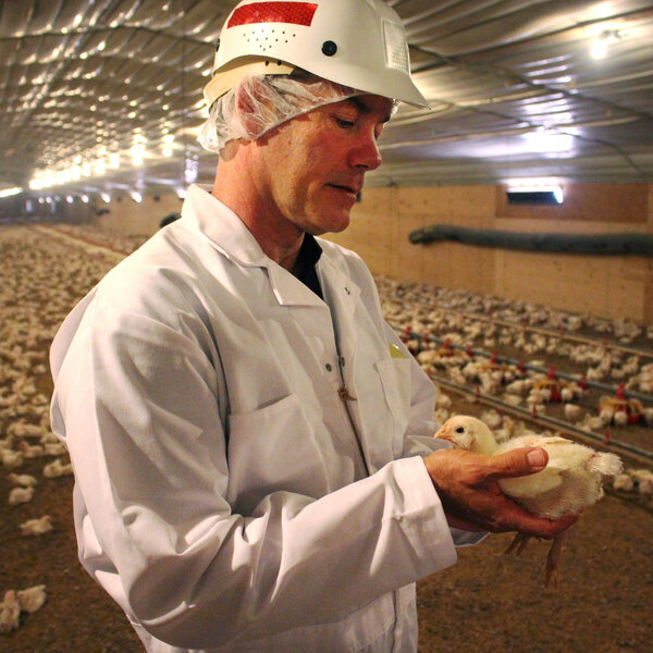 How Foster Farms Is Solving The Case Of The Mystery Salmonella