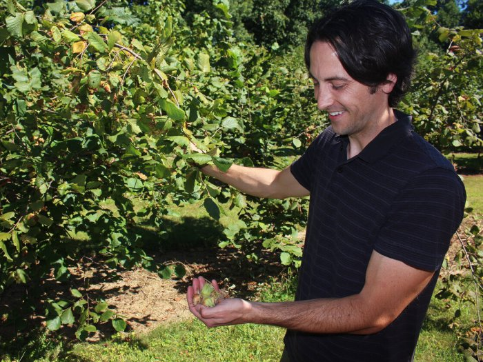 Thomas Molnar, a plant biologist at Rutgers University, is breeding new hazelnut varieties that can resist Eastern Filbert Blight.