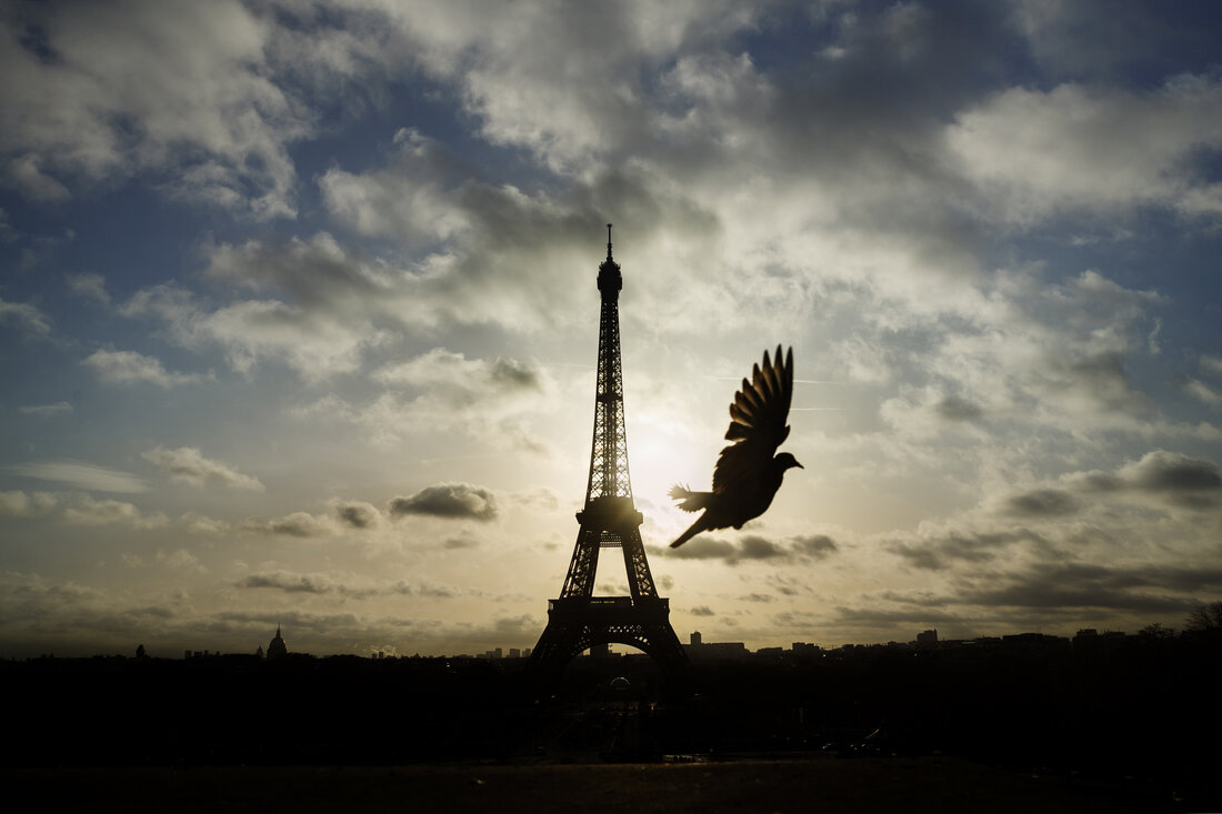 A bird flies in front of the Eiffel Tower, which remained closed on the first of three days of national mourning, in Paris, on Sunday.