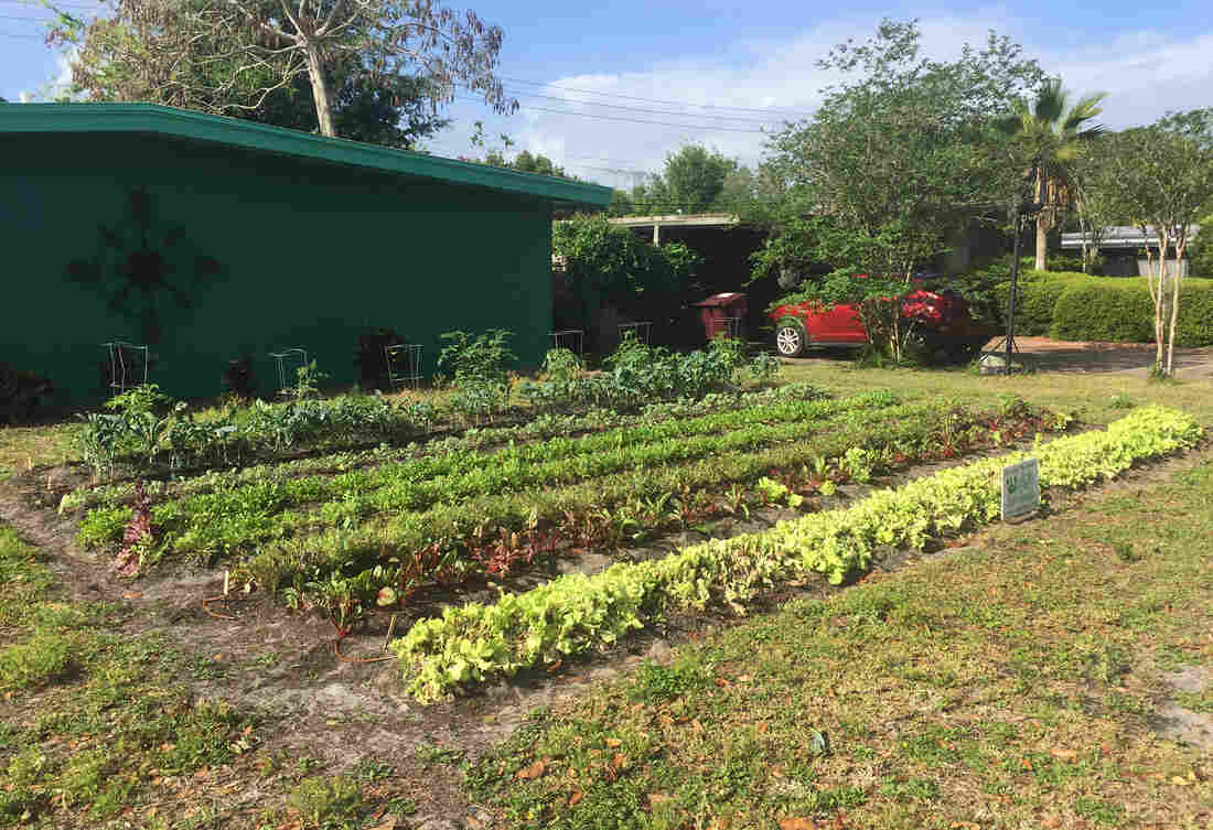 an all volunteer squad of farmers is turning florida lawns into food