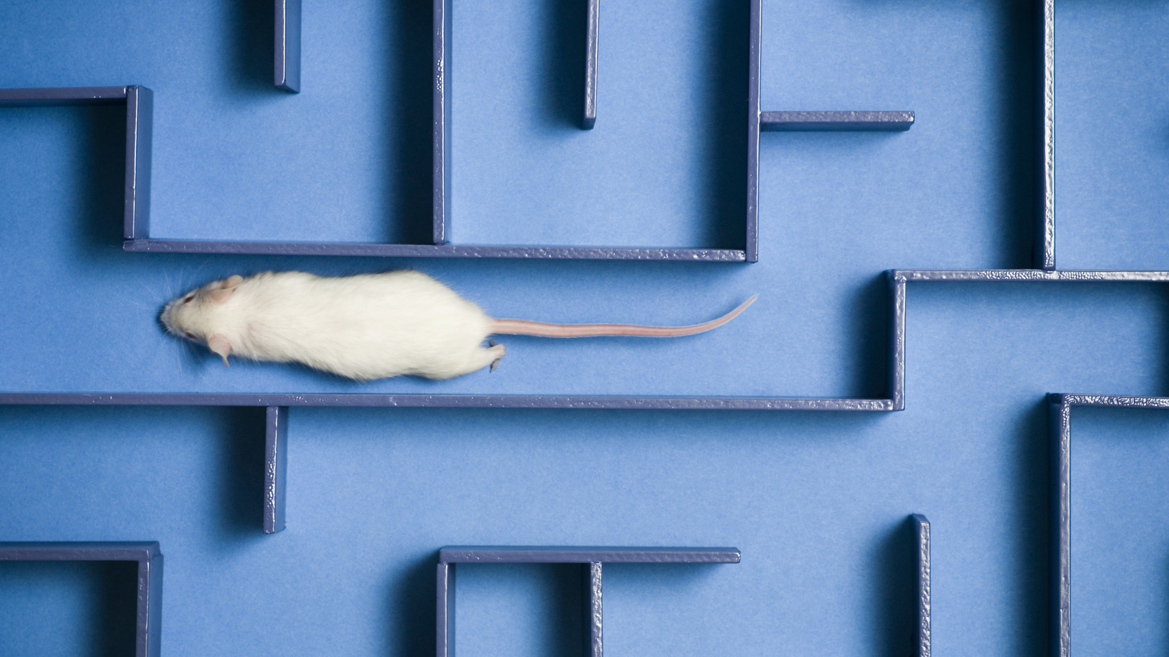 Researchers found a protein in human umbilical cord blood plasma improved learning and memory in older mice, but there
