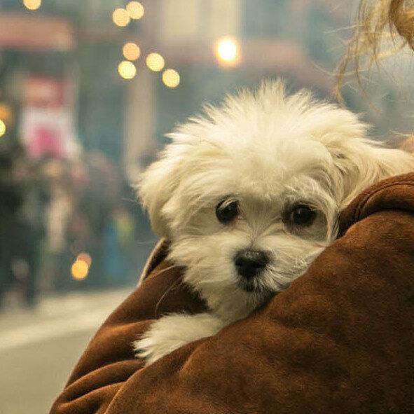 Some Marijuana-Derived Treatments Aim To Soothe Skittish Pets