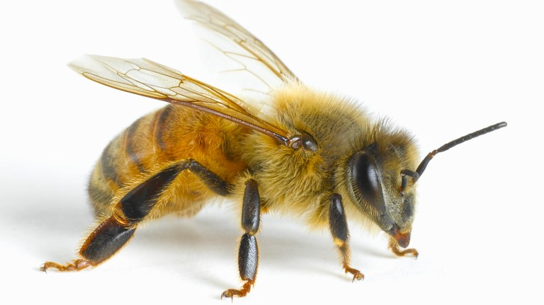 Using card with black symbols, researchers trained honeybees to understand that sugar water would always be located under a card with the least number of symbols — including when presented with a card that was totally blank.