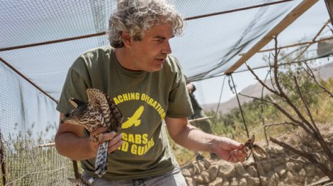 For Migratory Birds, Lebanon Is A 'Black Hole' Where They Are Hunted, Trapped, Killed