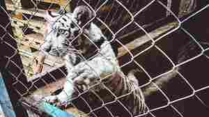 Worldwide Smuggling Crackdown Rescues Endangered Wildlife
