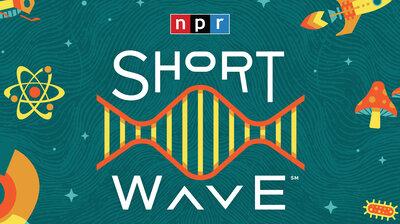 Introducing Short Wave
