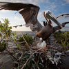 'Where The Land Used To Be,' Photos Show Louisiana Coast 10 Years After BP Oil Spill