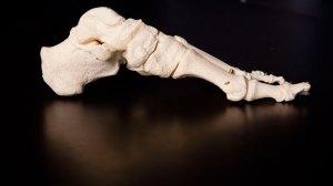 Human Foot, Profile