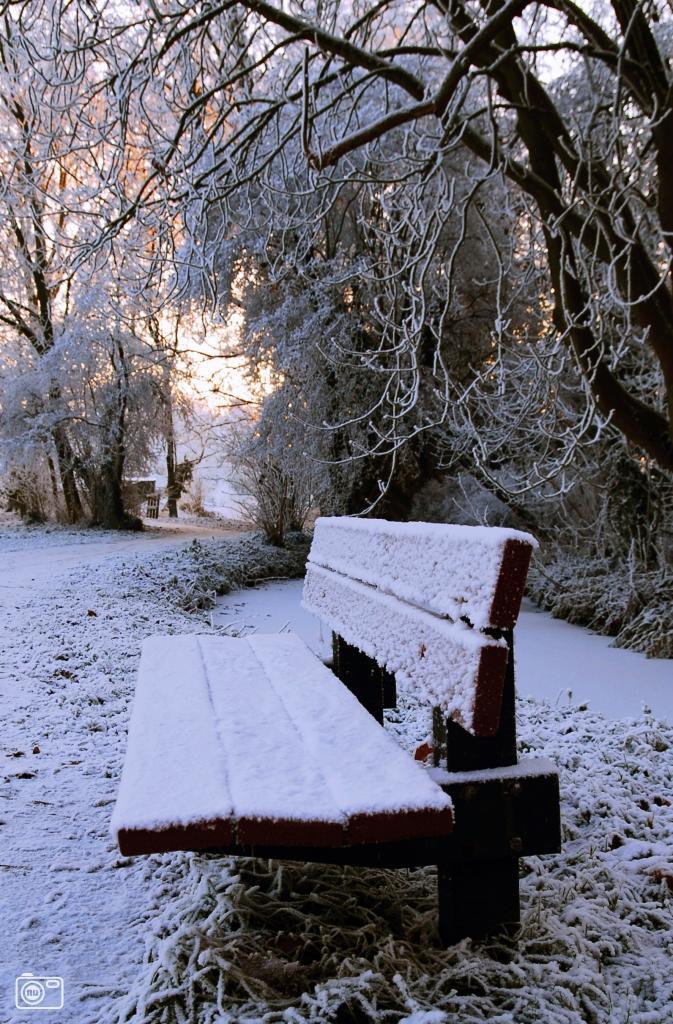 Winterse boswandeling