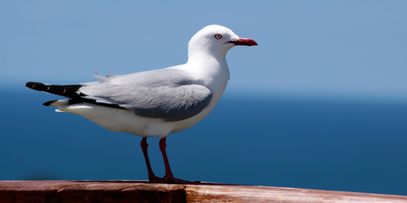 The birds appear to be getting braver. Photo / Thinkstock