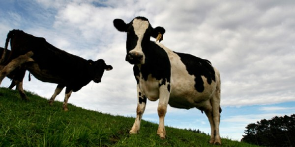 Fonterra was ranked the fourth biggest dairy company in the world in terms of turnover. Photo / Brett Phibbs