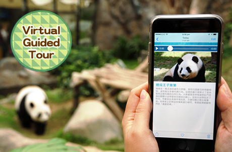 2. Virtual Guided Tour