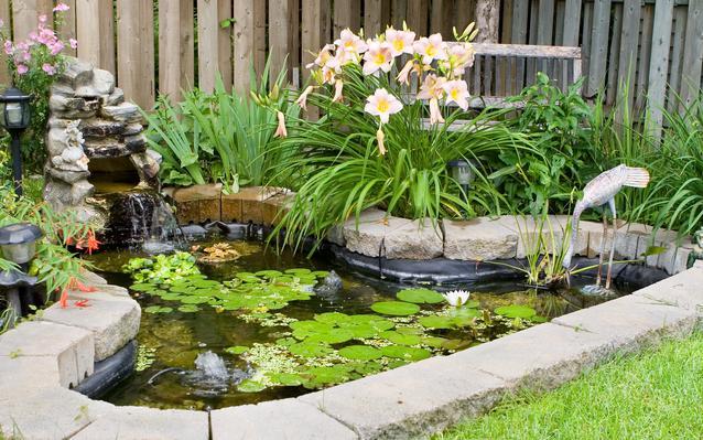 entretenir un bassin de jardin ooreka