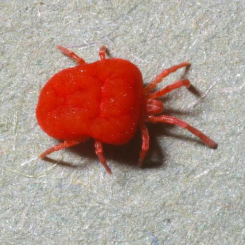 lutter contre les araignees rouges