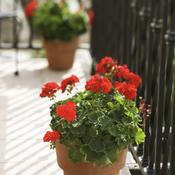 fleurir son balcon expose plein sud