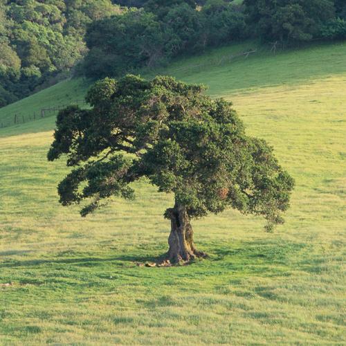 arbre a feuillage persistant liste