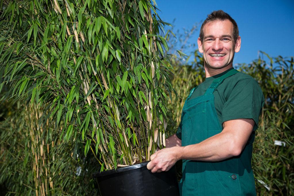 bambou balcon varietes et choix du