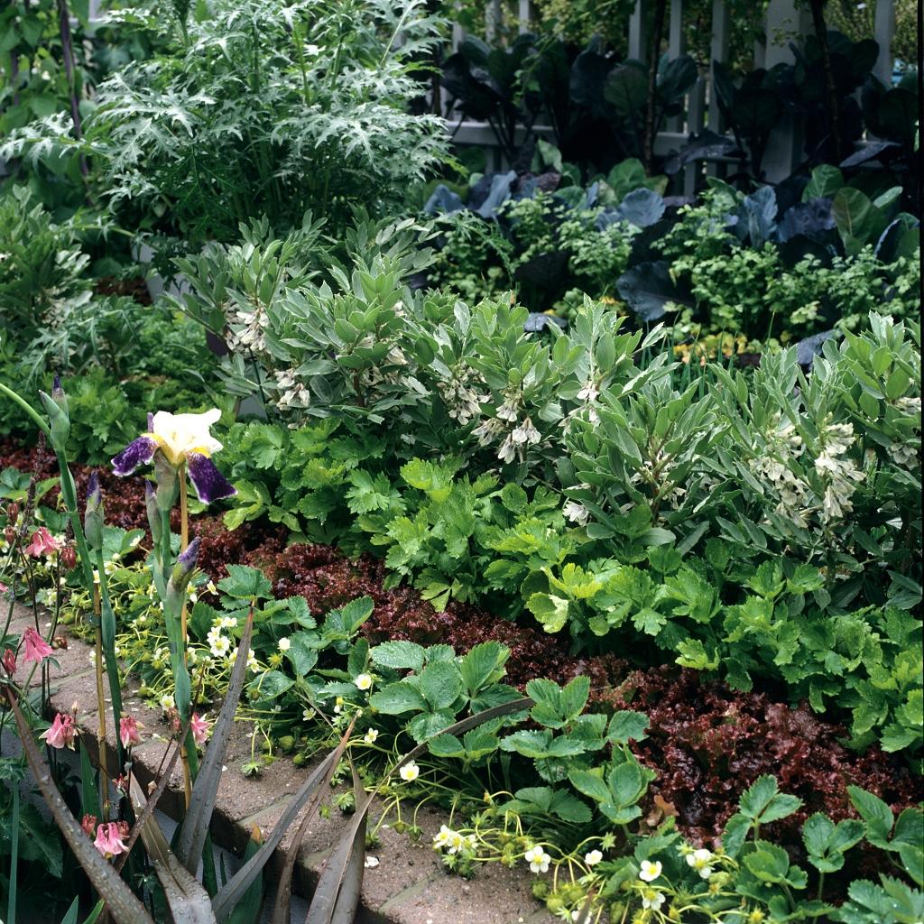 Cleri Rave Planter Et Cultiver Ooreka