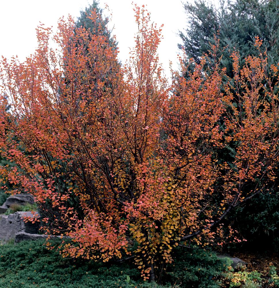 la parure resume la parure resume parure season multicolore de la