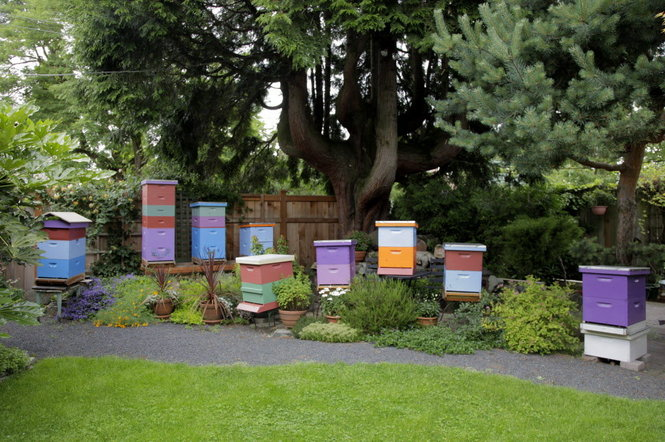 Bee-friendly gardens