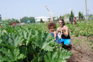 Jardin communautaire Mercier - Hochelaga-Maisonneuve