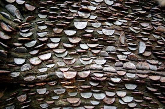 L'étrange coutume des arbres à monnaie - 5