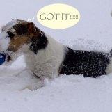 Min snötokiga parson Doggy