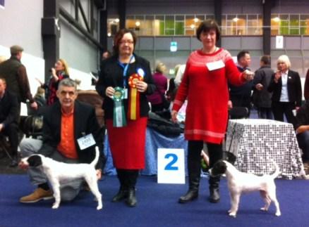My Dog 2015-01-05BIR Bredehalls LAdy MadonnaBIM Bredehalls JacksonDomare Eva Nielsen