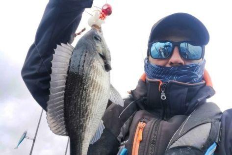 Une dorade grise, certe pas très grosse, mais qui fait plaisir au pêcheur.