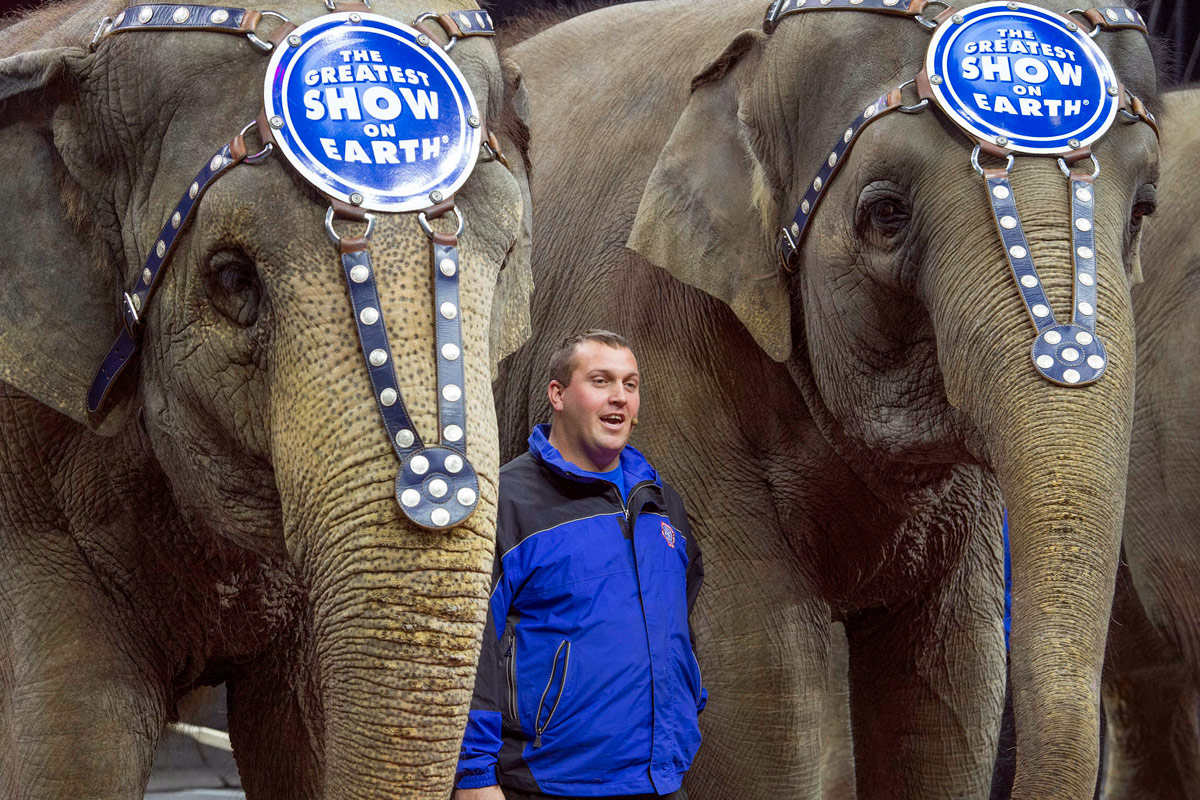 For Ringling Bros Elephants One Last Tour