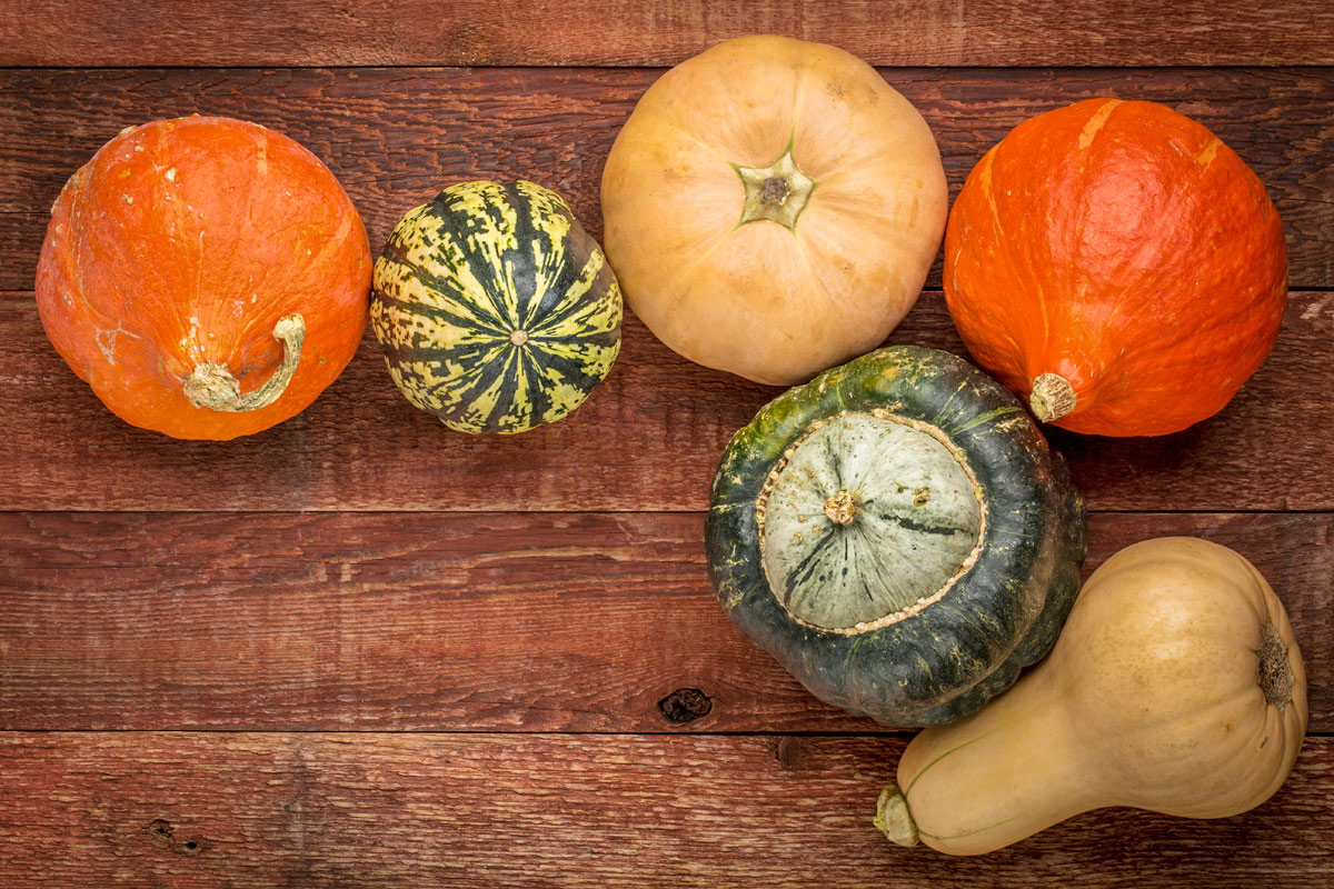 Image result for winter squash