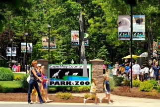Image result for cape may zoo
