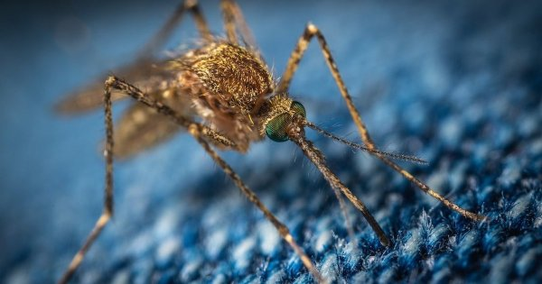 Two more cases of deadly mosquito-borne virus Triple E discovered in New Jersey