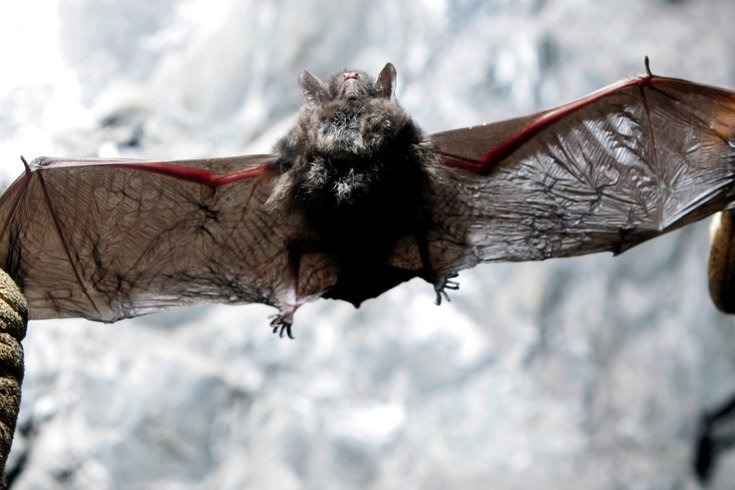 Mystery Virus That S 47 Is Tied To Bats In Saudi Arabia