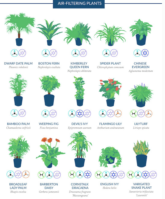 Image results for potted plants that purify air